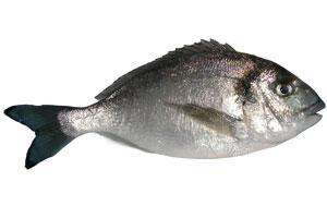 """Рыбка  """"Верховный Жрец """" Дорада, или Аурата (Sparus aurata"""